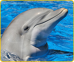 delfiin